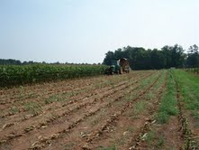 Cover photo for Alamance County Local Farms Survey