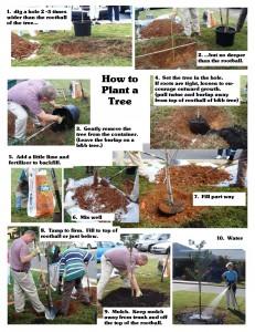 Tree Planting 10-07-09