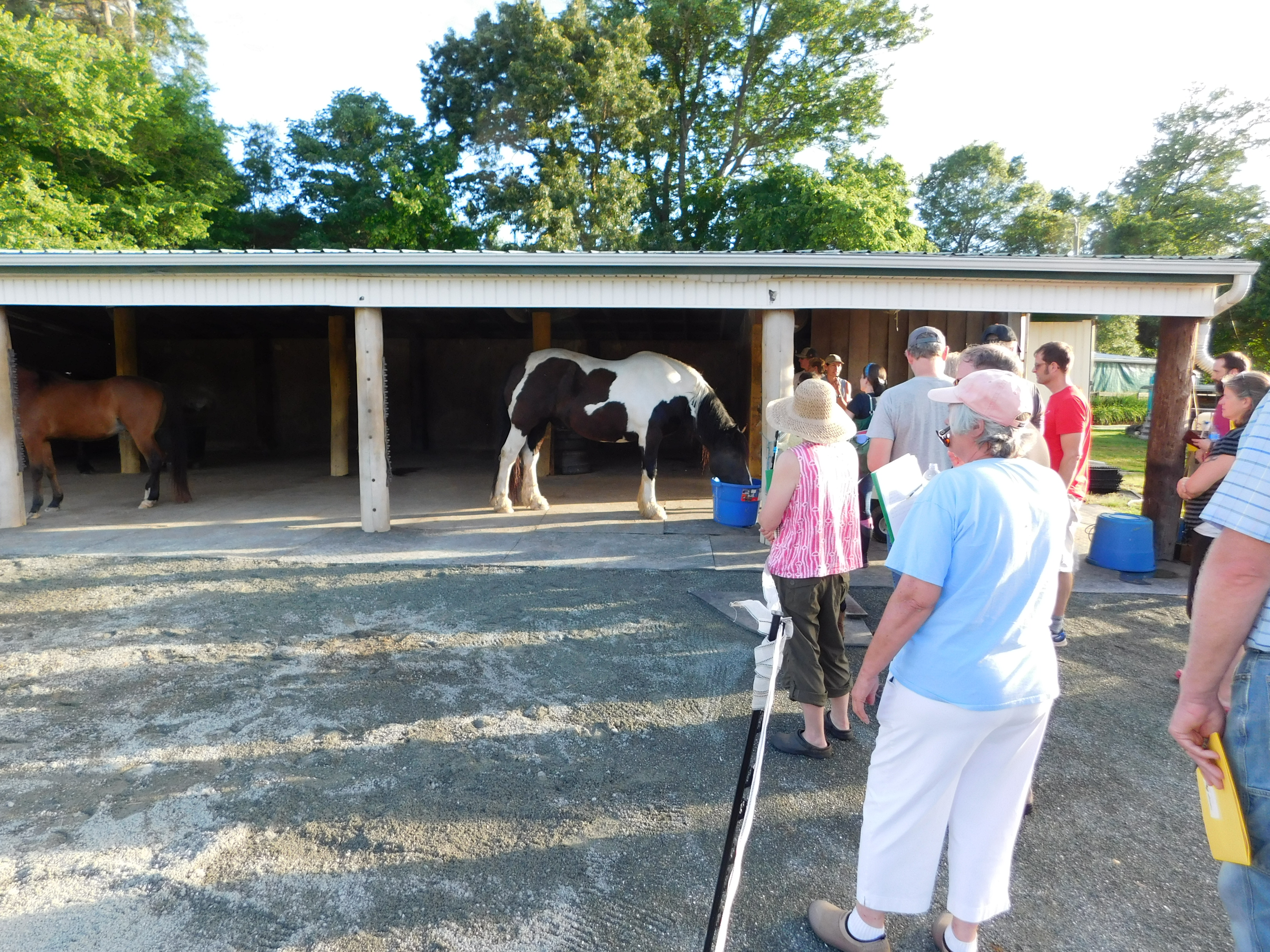 Participants look at a recently constructed equine dry lot image
