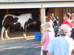 Cover photo for Horse Workshop a Big Hit With Horse Owners