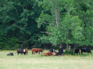 Cover photo for Amazing Grazing Summer & Fall Workshop Schedule