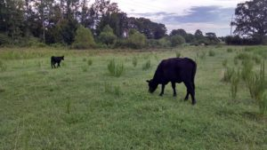 Cover photo for Pasture Weed Management Class