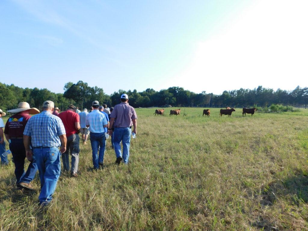 Farmers walking through pasture