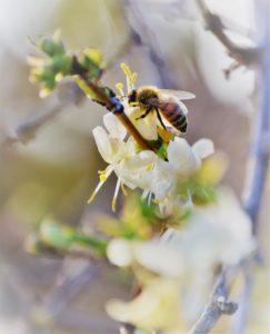 Cover photo for Alamance Gardener January 2019