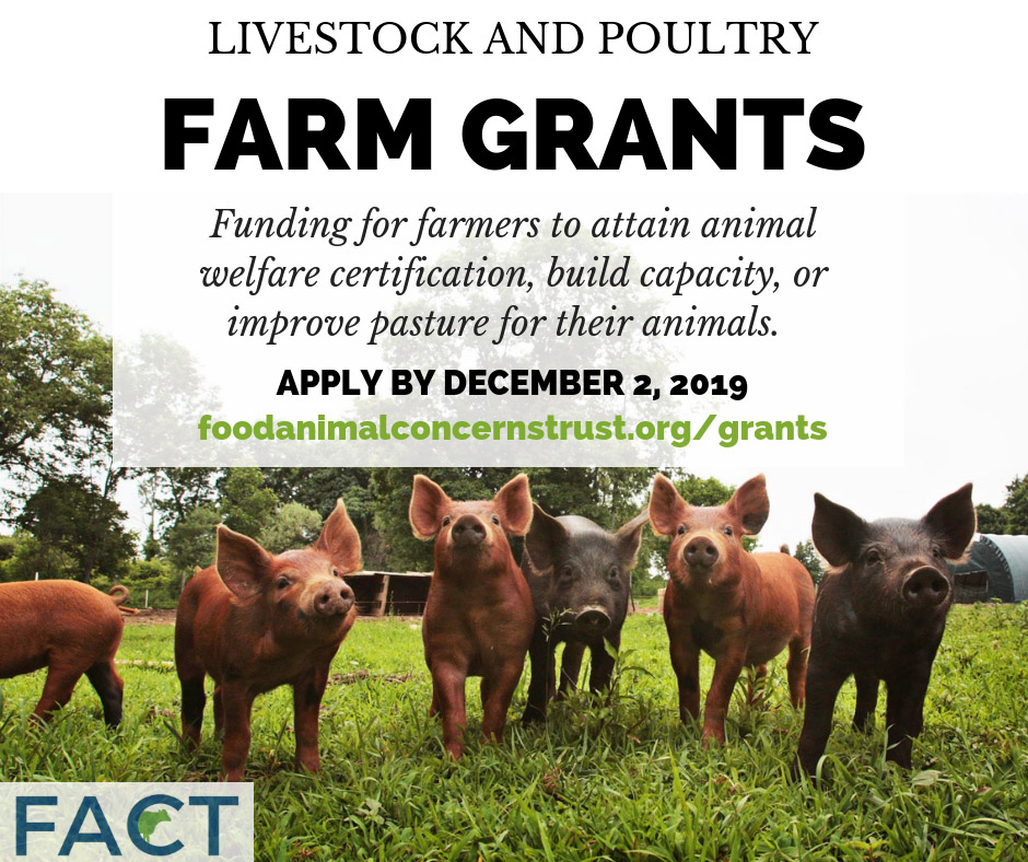 livestock grant pig photo