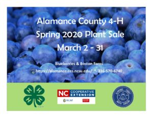 Cover photo for 4-H Plant Sale | Spring 2020