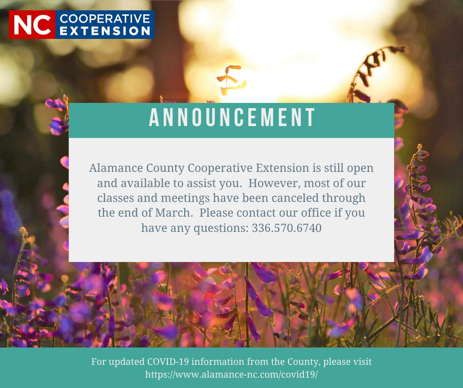 announcement with flowers