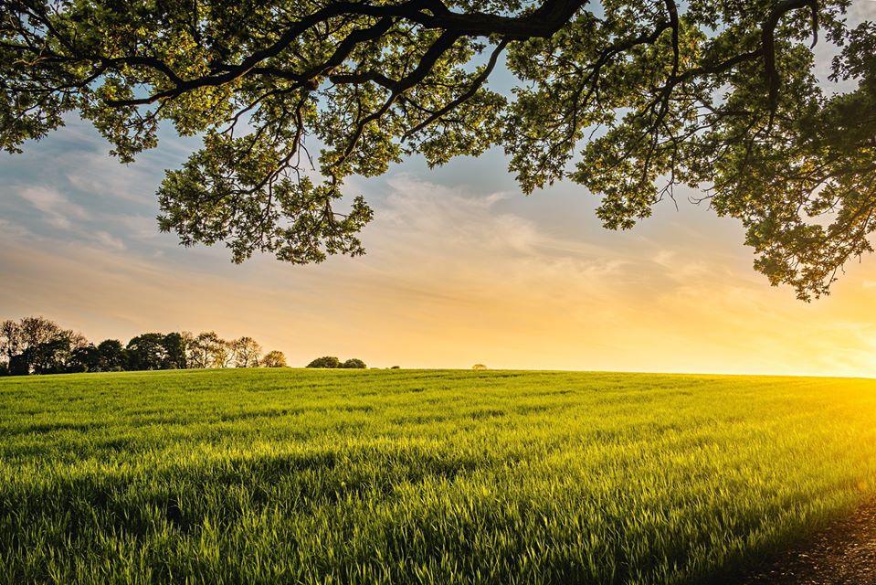 Grassy farm field at sunrise