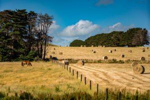 hay bales, horses, farm