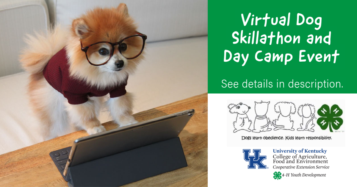 Picture of small, bespectacled dog using a keyboard
