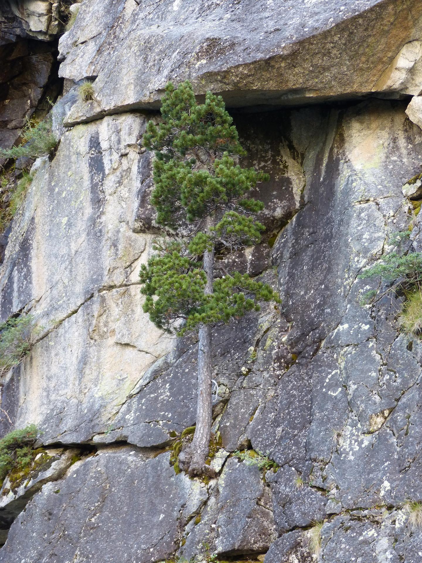 tree on cliffside